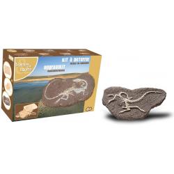 STRUTHIOMIMUS duży szkielet dinozaura wykopalisko na kamieniu