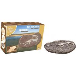 BARYONYX duży szkielet dinozaura wykopalisko na kamieniu