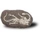 CAMARASAURUS duży szkielet dinozaura wykopalisko na kamieniu